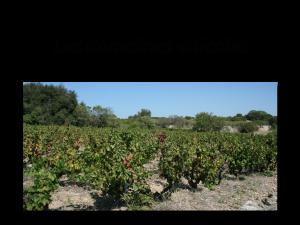 encart domaines viticoles