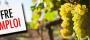 Domaine viticole à Murviel recrute